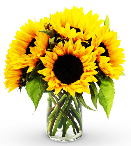 6 Pieces Seasonal Sunflower Vase Delivery To Philippines
