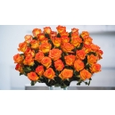 48 orange roses to philippines