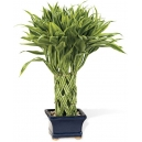 mothers day plants online to philippines