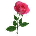 online pink roses to philippines