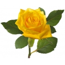 yellow roses online to philippines
