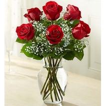 6 Premium Long Stem Red Roses