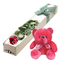 Send single red rose in box with red bear to Philippines