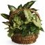 emerald garden basket to philippines